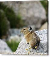 Pika Almost Done Canvas Print
