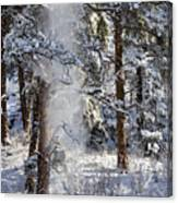 Pike National Forest Snowstorm Canvas Print