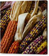 Pile Of Indian Corn Canvas Print