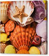 Pile Of Seashells Canvas Print