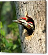 Pileated #29 Canvas Print