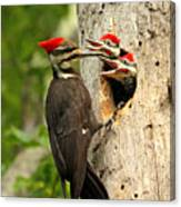 Pileated #30 Canvas Print