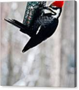 Pileated Billed Woodpecker Pecking 6 Canvas Print