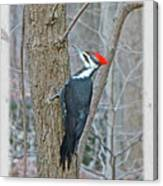 Pileated Woodpecker - Dryocopus Pileatus Canvas Print