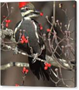 Pileated Woodpecker Lunch Canvas Print