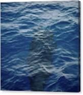 Pilot Whale 8  Canvas Print
