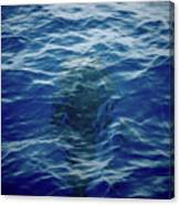 Pilot Whale 9 The Mermaid  Canvas Print