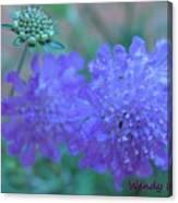 Pin Cushion Flower Canvas Print