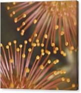 Pin Cushion Protea Canvas Print