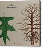 Pin Oak Tree Id Canvas Print