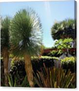 Pinball Plants, Long-pin Plants Canvas Print