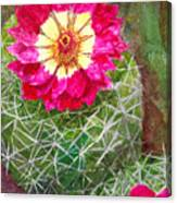 Pincushion Cactus Canvas Print
