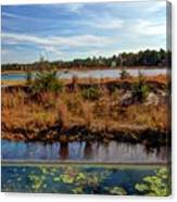 Pine Barrens Bog In New Jersey Canvas Print