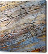 Pine Beetle Etchings Canvas Print