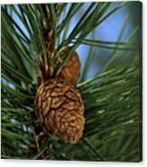 Pine Cone 2 Canvas Print