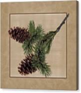 Pine Cone Design Canvas Print