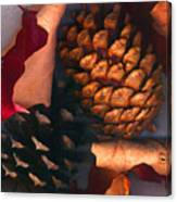 Pine Cones And Leaves Canvas Print