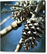 Pine Cones On Dry Branch Canvas Print