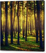 Pine Forest In La Boca Del Asno-segovia-spain Canvas Print
