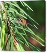 Pine Fresh Canvas Print