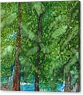 Pine Haven Canvas Print