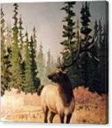 Pine Meadow Elk Canvas Print