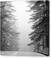 Pine Mist Canvas Print