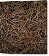 Pine Needles On Forest Floor Canvas Print