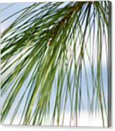 Pine Needles Series 3 Canvas Print