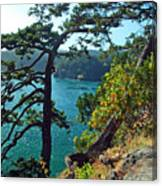 Pine Over The Bay Canvas Print