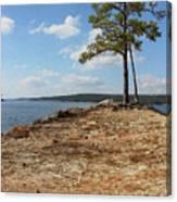 Pine Perch Canvas Print