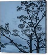 Pine Tree Antigua Guatemala Canvas Print