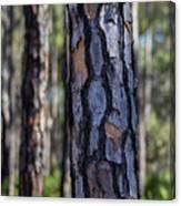 Pine Tree Bark Canvas Print