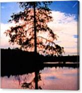 Pine Tree By Peck Lake 5 Canvas Print