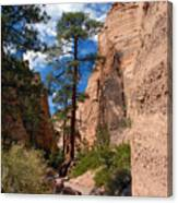 Pine Tree Canyon Canvas Print