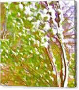 Pine Tree Covered With Snow Canvas Print