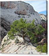 Pine Tree On Top Of Angels Landing In Zion Canvas Print