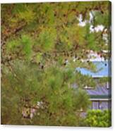Pine Tree Canvas Print