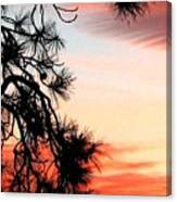 Pine Tree Silhouette Canvas Print