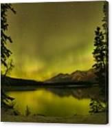 Pine Tree Silhouettes Canvas Print