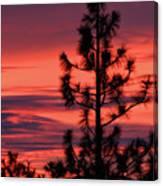 Pine Tree Sunrise Canvas Print