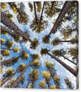 Pine Tree Vertigo Canvas Print