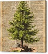 Pine Tree,cedar Tree,forest,nature Dictionary Art,christmas Tree Canvas Print