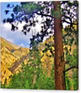 Pine Trees Canvas Print
