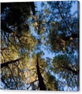 Pine Trees Near Ruidoso Nm Canvas Print