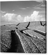 Pineapple Field - Bw Canvas Print