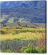Pineapple Fields Canvas Print