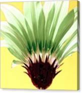 Pineapple Flower Canvas Print