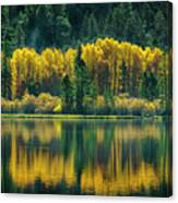 Pines And Aspens Canvas Print