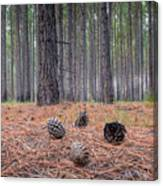 Pines And Needles 4 Canvas Print